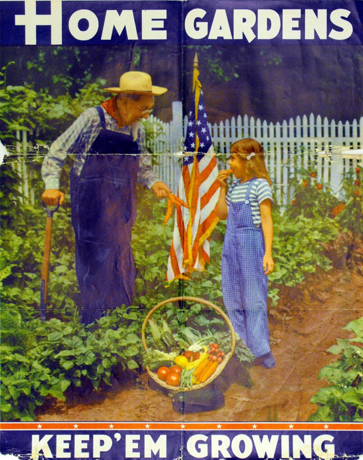 Older man and young girl in overalls harvesting vegetables
