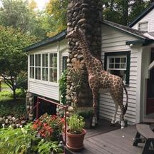 giraffe by a house
