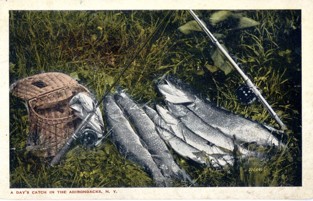 color postcard of a row of fish in the grass